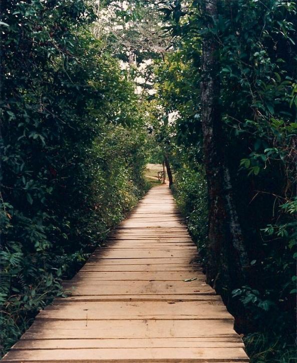 Path in Guatemala